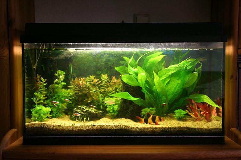 lampa uv acvariu